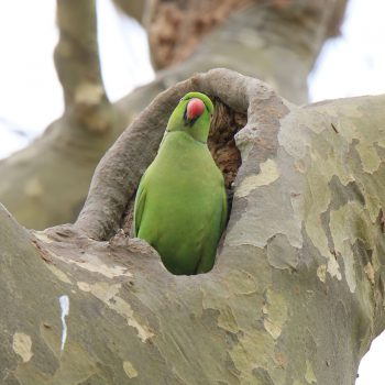 Kontrowersyjna papuga