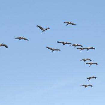 Międzynarodowy Dzień Ptaków Wędrownych