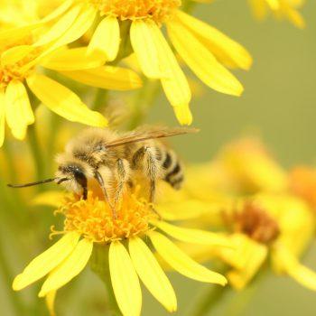 Światowy Dzień Pszczoły