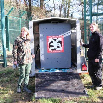 Lew z Gdańska pojechał do niemieckiego zoo