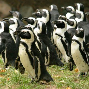Światowy Dzień Wiedzy o Pingwinach