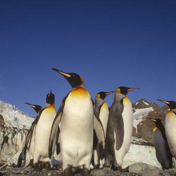 Antarktyda jeden z najszybciej ocieplających się obszarów na Ziemi